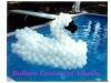 swan-in-pool